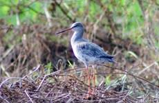 Vùng đất hoang dã của các loài chim nước và chim di cư quý hiếm