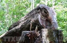 Quảng Ngãi: Vụ phá rừng Minh Long - Lời giải thích có hợp lý?