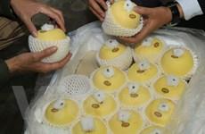Táo Aomori Nhật Bản chính thức có mặt trên thị trường Việt Nam