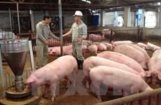 Giá thịt lợn sụt giảm đã tác động trực tiếp lên chỉ số CPI tháng Năm