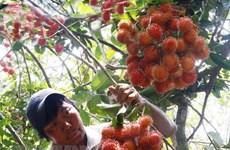 Chôm chôm Việt Nam chính thức thâm nhập vào thị trường New Zealand