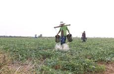 Hải Quan phản hồi về thuế nhập khẩu mặt hàng hạt giống rau