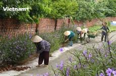 Xây dựng nông thôn mới ở Quảng Ninh: Có bắt đầu, nhưng không kết thúc