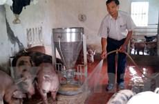 Nhà sáng chế nuôi lợn bằng... thức ăn sinh học có thảo dược