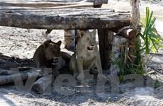 [Photo] Dạo chơi tại vườn thú bán hoang dã đầu tiên ở Việt Nam