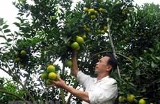 Chỉ dẫn địa lý: 'Đòn bẩy' giúp tăng giá trị của nông sản Việt Nam