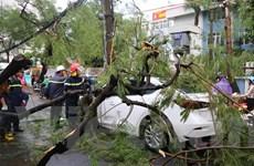 [Photo] Cây xanh đổ ngổn ngang sau trận mưa giông lớn tại Hà Nội