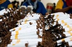 Lượng thuốc lá lậu được tiêu thụ tại thị trường Italy giảm 50%