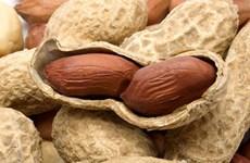Ăn lạc thường xuyên giúp giảm nguy cơ tử vong vì bệnh tim mạch