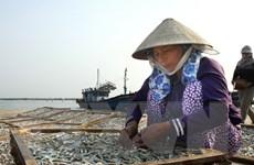 Ngư dân vùng biển ở Bạc Liêu phấn khởi vì trúng mùa ruốc