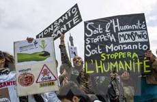 Các nước thành viên EU tự quyết định về thực phẩm biến đổi gen