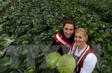 Ủy ban châu Âu chi hơn 110 triệu euro thúc đẩy tiêu thụ nông sản