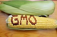 EP phủ quyết đề xuất cấm sử dụng sản phẩm biến đổi gen