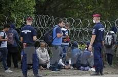 Macedonia dựng rào thép trên biên giới Hy Lạp chặn người di cư