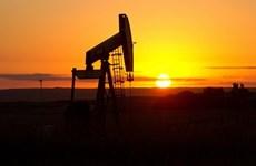 Giá dầu tại thị trường châu Á lui gần về mốc 30 USD/thùng