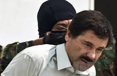 Cơn sốt trùm ma túy El Chapo khuynh đảo phòng vé Mexico
