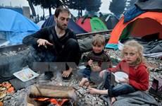 Dòng người di cư từ Thổ Nhĩ Kỳ vẫn không ngừng đổ về Hy Lạp