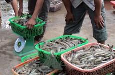 Tiếp tục lấy mẫu hải sản tầng đáy trong vòng 20 hải lý để xét nghiệm