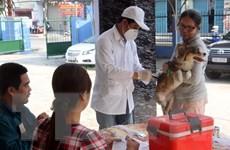 49 trường hợp tử vong vì bệnh dại tại 20 tỉnh, thành phố