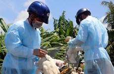 Bộ Y tế: Không chủ quan trước nguy cơ xảy ra dịch cúm gia cầm