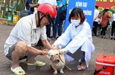 Ghi nhận 67 người bị chết vì bệnh dại ở 24 tỉnh thành phố