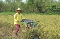 Buôn lậu gạo tại Philippines gia tăng do chi phí sản xuất cao