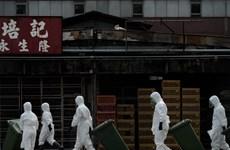 Trung Quốc xác nhận bùng phát cúm gia cầm H5N1