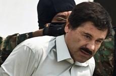 Mỹ phong tỏa tài sản liên quan tới trùm ma túy El Chapo