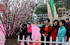 Khai mạc Lễ hội Hoa anh đào Hạ Long năm 2014
