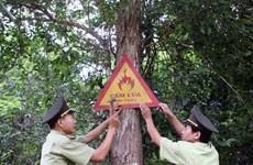 Phú Quốc: Hơn 4.000ha rừng nguy cơ cháy bất kỳ lúc nào