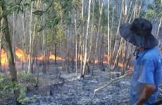 Hai vụ cháy rừng nghiêm trọng liên tiếp xảy ra tại Nghệ An
