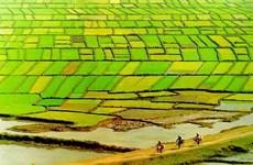 Điều chỉnh quy hoạch Đồng bằng sông Cửu Long đến năm 2030