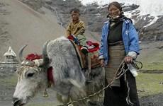 """Người Tây Tạng sống được trên núi cao nhờ """"họ hàng"""" tuyệt chủng"""