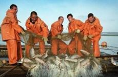 Nga triển khai dự án bảo vệ cá hồi cho thế hệ tương lai
