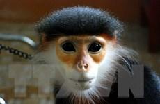 Phát hành bộ tem đặc biệt về các loài thú linh trưởng Việt Nam