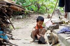 Cảnh báo nguy cơ bùng phát bệnh dại trên đàn chó tại Nam Định