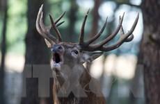 Số lượng động vật hoang dã giảm hơn một nửa trong 40 năm qua