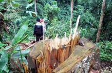 Phạt tù Phó Ban quản lý Dự án bảo vệ rừng về tội hủy hoại rừng