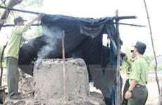 Phát hiện gần 130 vụ phá rừng ở Vườn Quốc gia Mũi Cà Mau