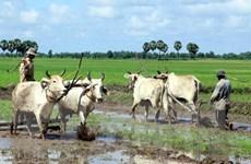 Đồng Tháp sử dụng 6 giống lúa đặc sản, chủ lực cho vụ Đông Xuân