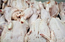 70% thịt gà tại các siêu thị của Anh bị nhiễm khuẩn gây tiêu chảy