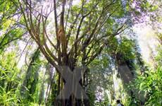 Các giải pháp quản lý bảo tồn bền vững đa dạng sinh học
