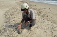 Dầu vón cục lại trôi dạt vào các bãi tắm tại Bà Rịa-Vũng Tàu