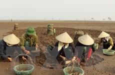 Hà Tĩnh thiệt hại hơn 8 tỷ đồng do tình trạng ngao chết hàng loạt