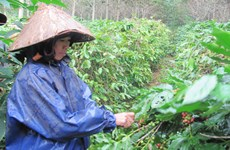 """Những cơn mưa """"vàng"""" giải nhiệt cho nông dân Đồng Nai"""