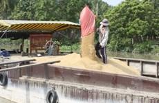 Kiến nghị Nhà nước tham gia dự trữ 10-12% sản lượng lúa gạo