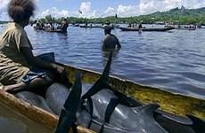 Cảnh báo về nạn giết cá heo để lấy răng ở đảo quốc Solomon