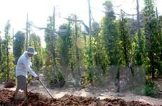 Đắk Lắk cần xử lý nghiêm đối tượng phá rừng lấy gỗ làm trụ tiêu