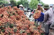Tập trung tháo gỡ khó khăn tiêu thụ nông sản trên từng thị trường
