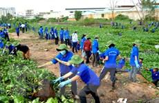 TP.HCM: Hơn 80.000 sinh viên tham gia chiến dịch Mùa hè Xanh